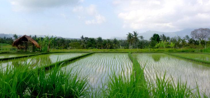 Notre prochain séjour initiatique à Bali en mars 2018